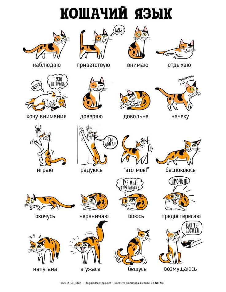Картинки по запросу язык тела собаки