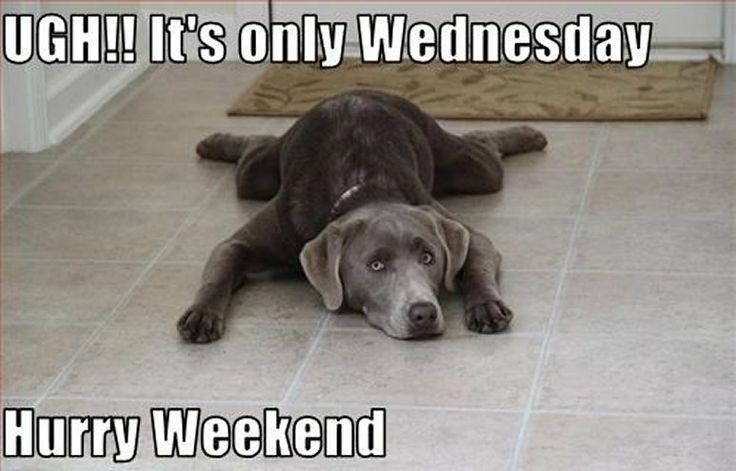 UGH!! It's only Wednesday Dog | daze of the week ...