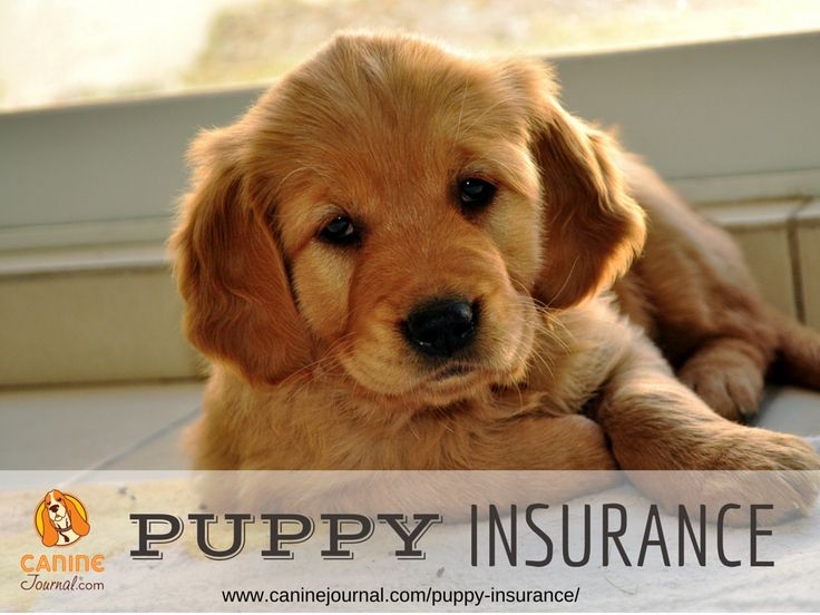 Puppies Are More Curious & Have Weaker Immune Systems Than Mature Dogs... Consider Puppy Insurance!