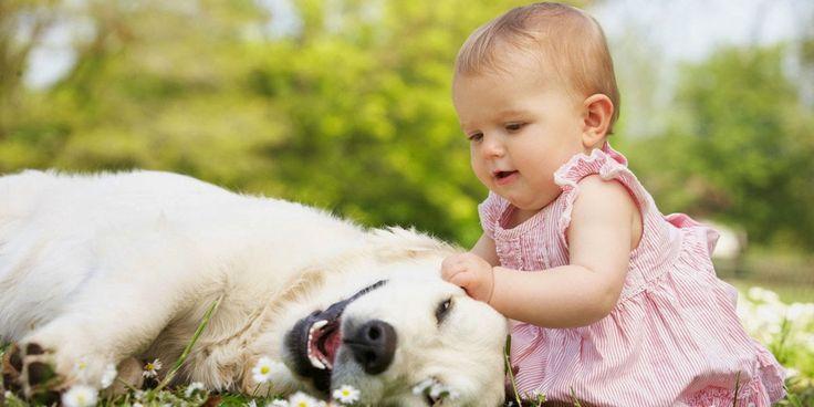Birlikte Oynayan Sevimli Bebek ve Köpekler