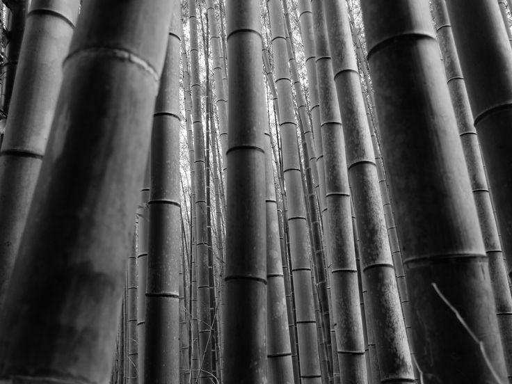 Kyoto Sagano,path of Bamboo-forest