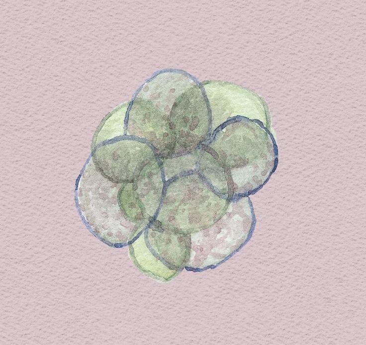 A partir de día 3 de cultivo comenzará la expresión génica de nuevo, en este caso, la del genoma embrionario.