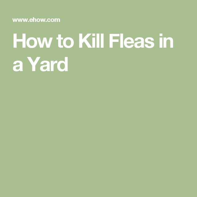How To Get Rid Of Fleas | Fleas in yard, Fleas, Kill fleas ...