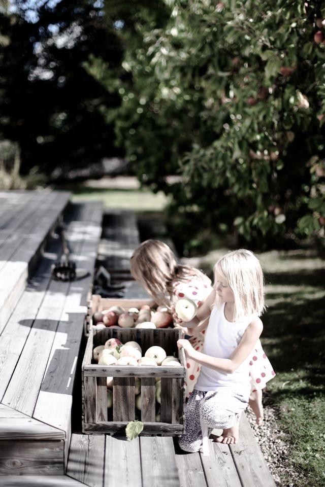 Fruit plukken #appels #houtenkisten #tafels