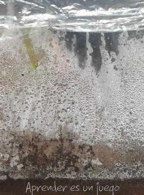 Experimento sencillo sobre el ciclo del agua