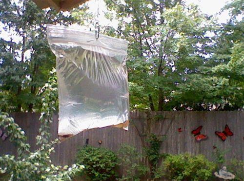 Vrouw doet centjes in een zak met water en laat het de HELE zomer hangen. Reden? Geniaal!