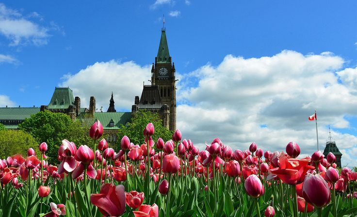 Ottawa In Blossom by AZ Imaging on 500px