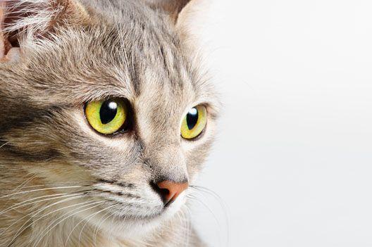 Kot - zwierzę święte i wyklęte