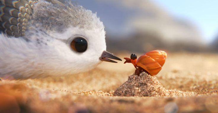 """Scoprite i segreti di """"Piper"""", l'ultimo corto Pixar http://www.nientepopcorn.it/notizie/piper-cortometraggio-pixar-42062/"""