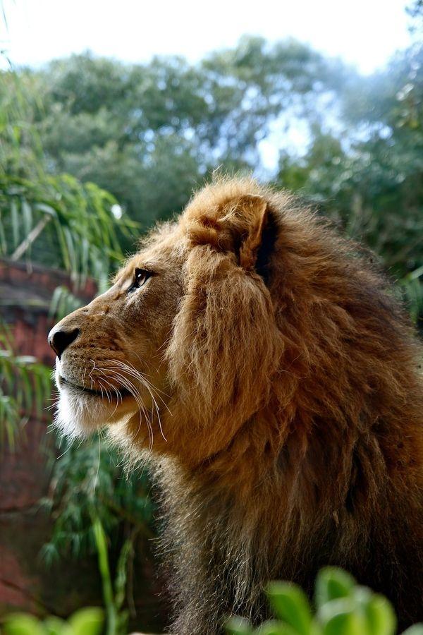 King Profile by clairebenito. S)