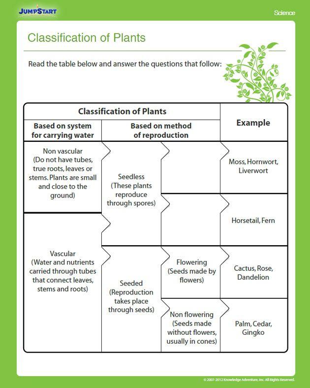 classification of plants education pinterest plants. Black Bedroom Furniture Sets. Home Design Ideas