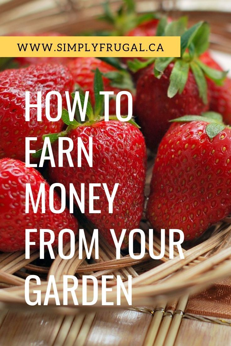 How to Earn Money from your Garden – Best of SimplyFrugal.ca