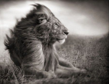 great B&W photos by photographer Nick Brandt