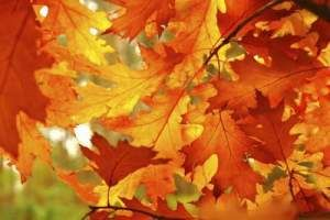 Fun in the Fall: 3 Steps to Prep Your Virginia Home for the Winter