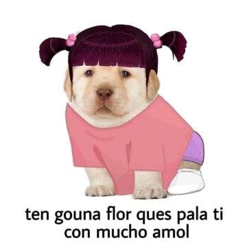 25 Memes Del Perrito Tierno Que Son Efectivamente Muy Tiernos Memes Memes Perros Memes Divertidos