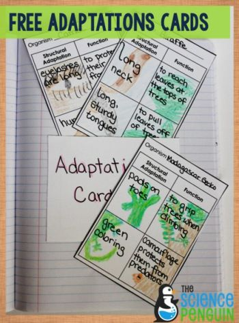 Free Adaptations Trading Cards printable for students to make!