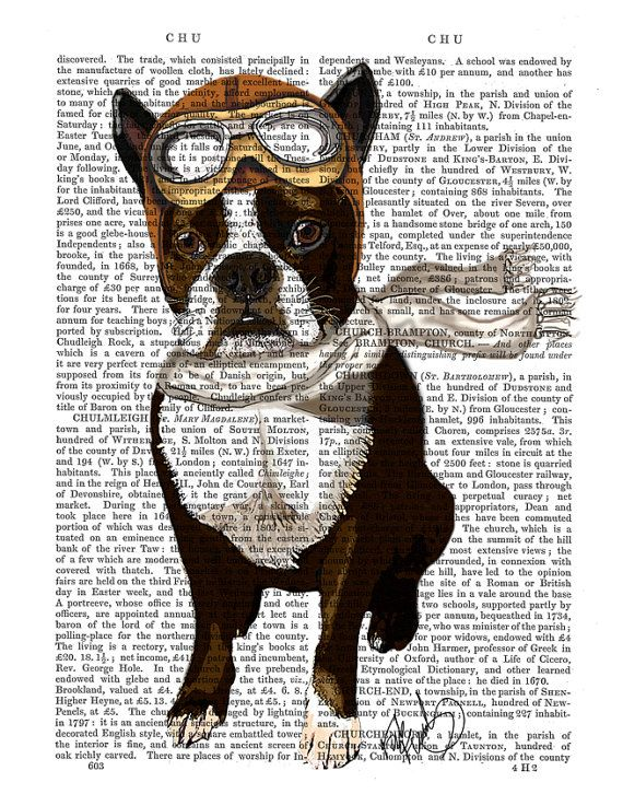Boston Terrier Flying Ace