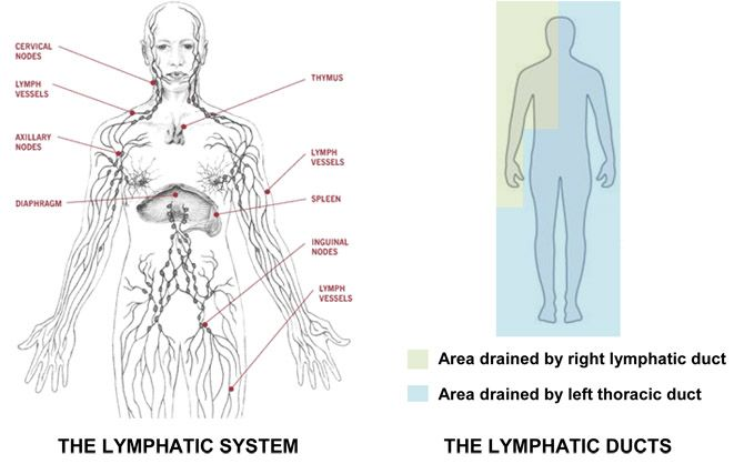 16 Signs There's A Toxic, Congested Lymph In The Body And How To Help Drain It