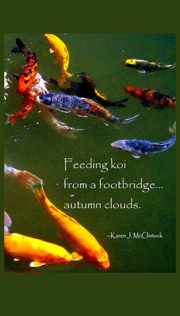 1319 best Koi images on Pinterest | Mosaic art, Mosaic projects and ...