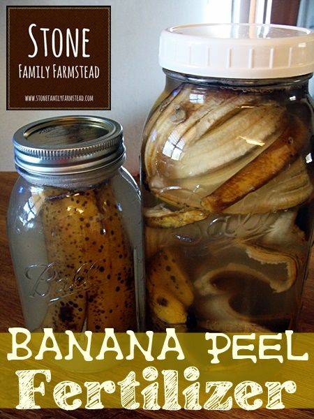 "Banana Peel Gardening Liquid Fertilizer Recipe Homesteading  - The Homestead Survival .Com     ""Please Share This Pin"""