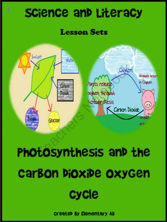 The Carbon Cycle and the Nitrogen Cycle | Earth Science