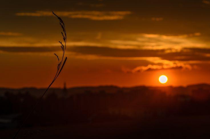 Grass at sunset by Marek Weisskopf on 500px