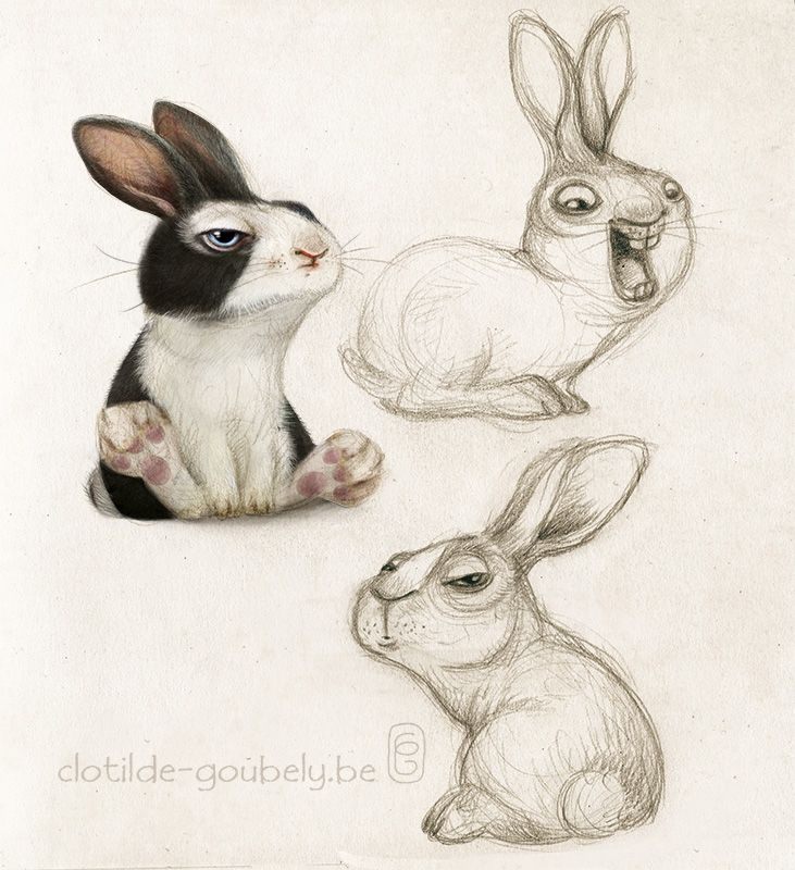 Hare illustration - photo#25