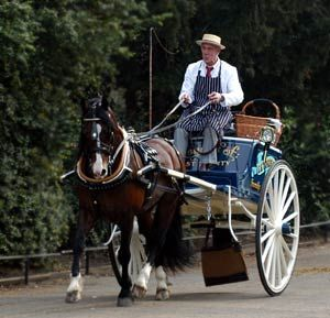 Butcher's Cart   Harness Horse