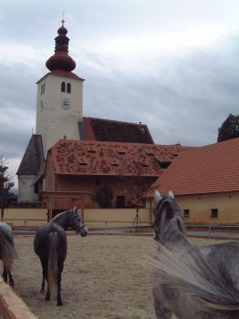 This the the place where Lipizzaner horses are bred.