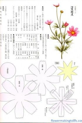 cosmos çiçeği