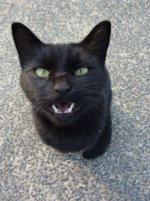 * * CAT USES DEATH STARE ON TODDLER.