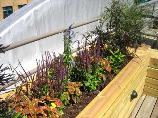 Flickr Finds: Kathrynu0027s Rooftop Garden | Deck Box, Rooftop Gardens And  Decking