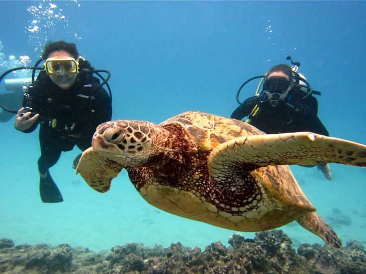 BestPlacesToVisitInTheWorld In The World Splashdive - The 10 best scuba diving locations in the world
