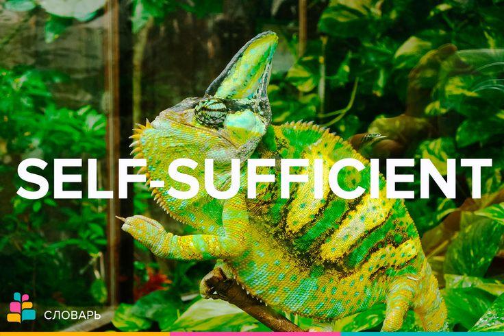 Self-sufficient |ˈselfsəˈfɪʃənt| — самоуверенный, самодостаточный, независимый в экономическом смысле  People who live in the Australian outback tend to be self-sufficient / Люди, которые живут в австралийской глубинке, как правило, самодостаточны.    #самодостаточный