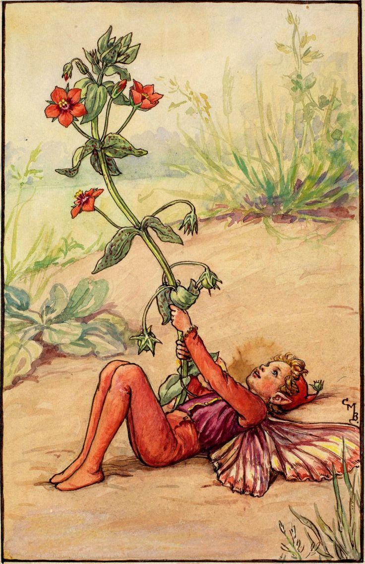 Scarlet Pimpernel Fairy- Cicely Mary Barker