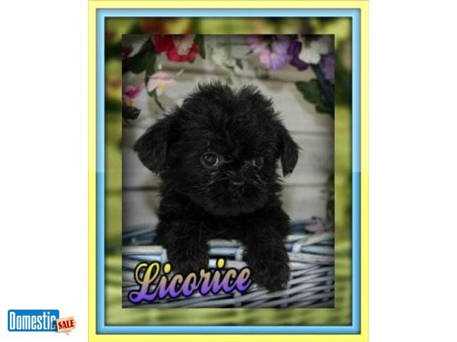 Licorice Female Brussels Sprout This Is Licorice Is Brussels
