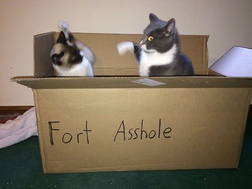 """Joey and Ozzy fighting over """"the fort."""""""