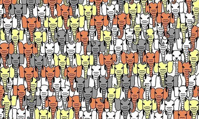 (2017-06) Find pandaen