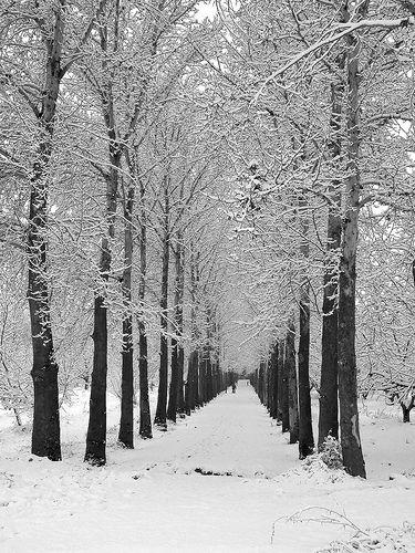 snow by Beshef, via Flickr