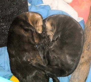 Cooper and Webster, residents at the Clearwater Marine Aquarium, cuddling up for a little nap.