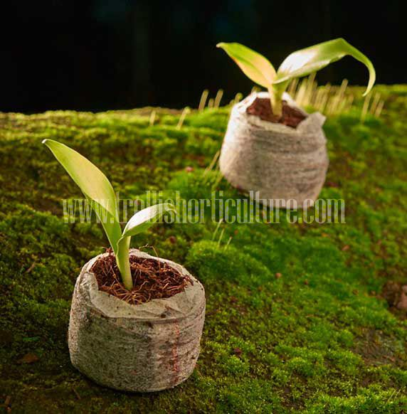 13 best coir peat images on pinterest coir gardening and garden ideas mini greenhouse seed germination grow bags paper seeds solutioingenieria Choice Image