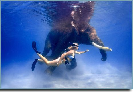 Swimming with elephants. Andaman and Nicobar islands, India