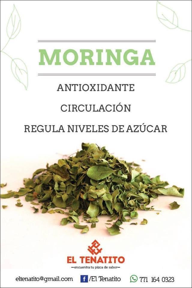 21 best images about Beneficios de la Moringa on Pinterest