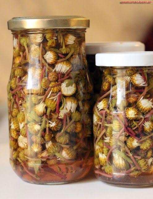 Richesses culinaires naturelles, plantes sauvages comestibles, champignons, algues, coquillages, crustacés et plein de recettes...
