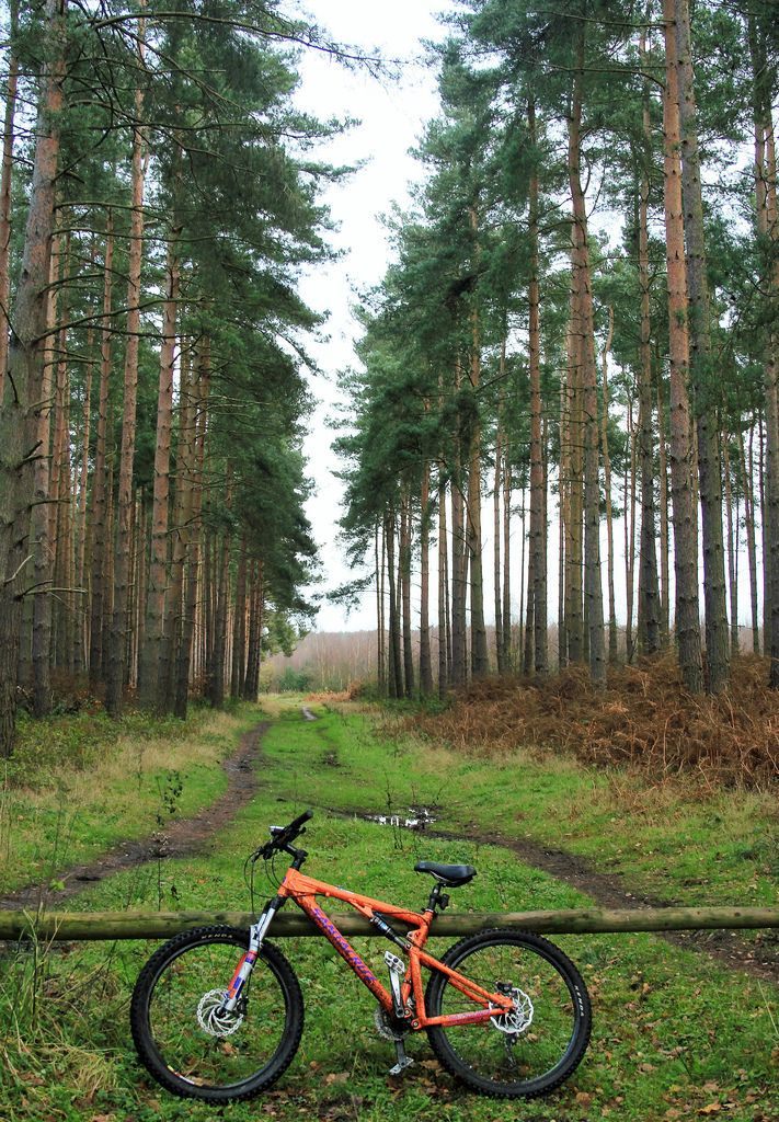 wanderthewood:    Clumber Park Nottinghamshire England by redshoesd