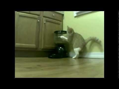 Food-Crazed Cat vs. Automatic Feeder