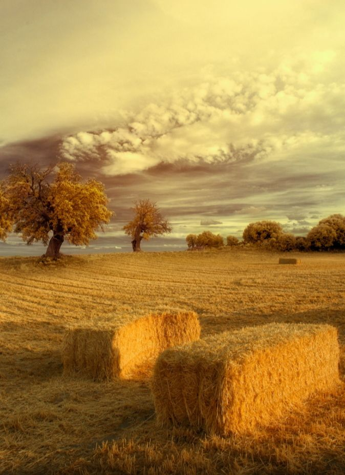 It is not easy to walk alone in the country without musing upon something.  ~Charles Dickens