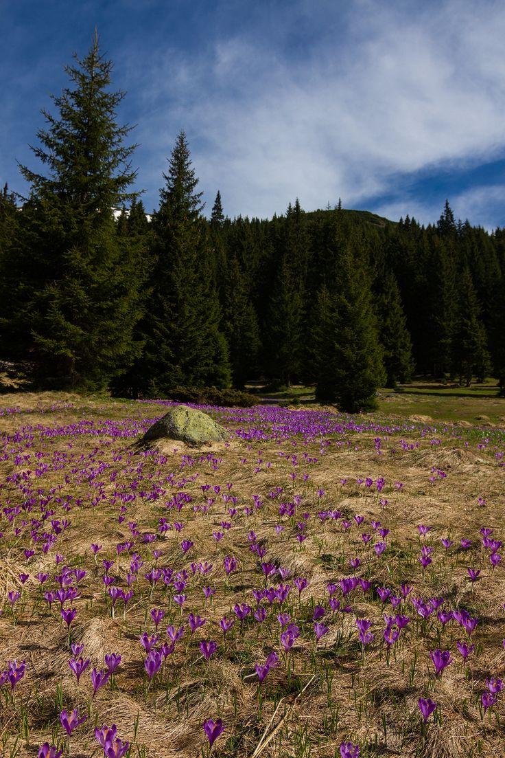 Parcul Naţional Retezat - tărâmul fermecat cu ochi albaştri! - Galerie Foto si VIDEO