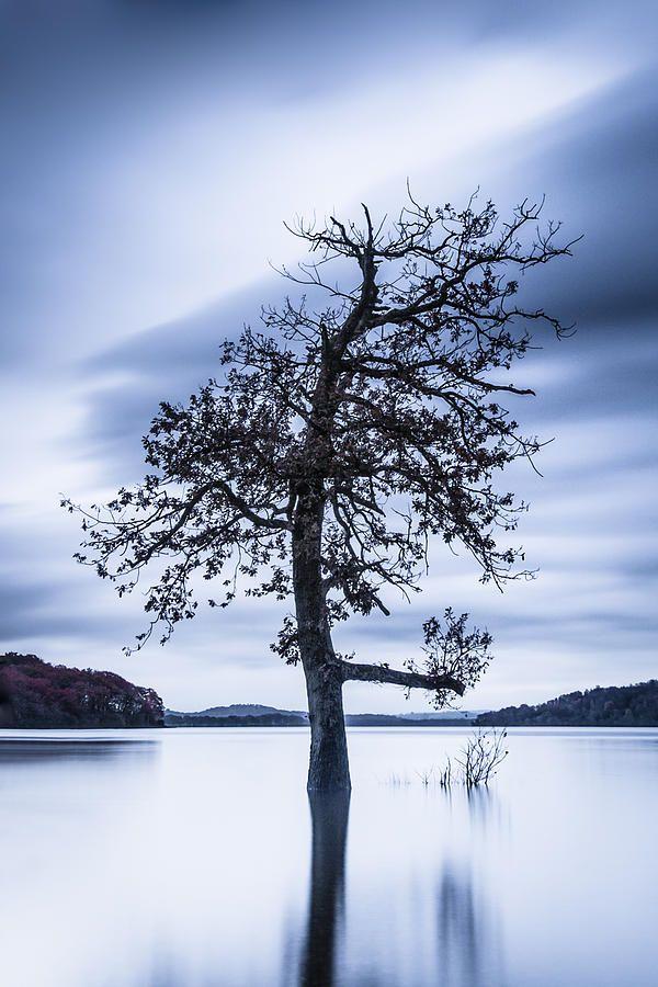 The Quiet Tree by Lynne Douglas.