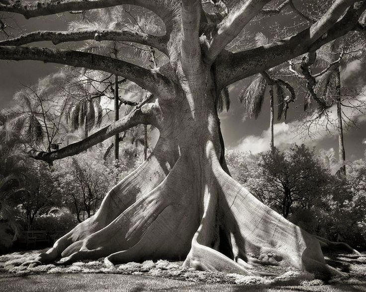 Photographer Spent 14 Years Looking For Worlds Oldest Tree